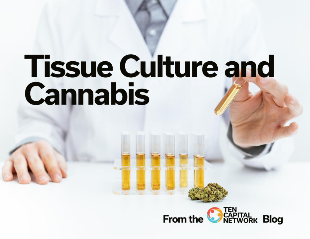 Tissue Culture and Cannabis